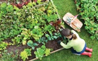 Можно ли переоформить огород в участок земли для ИЖС?