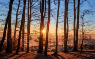Правомерен ли отказ в государственной регистрации земли лесного фонда?