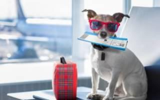 Справка от ветеринара для перевозки в самолете