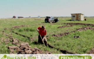 Каков порядок выдела земельного пая в собственность?